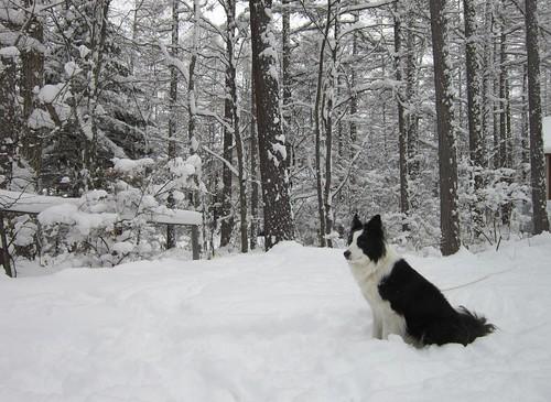大雪の庭のランディ 2012年12月10日9:44 by Poran111