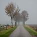Vanishing in the Fog - Brabant by Ferdi's - World