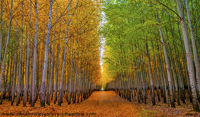 Autumn Tree Farm and road