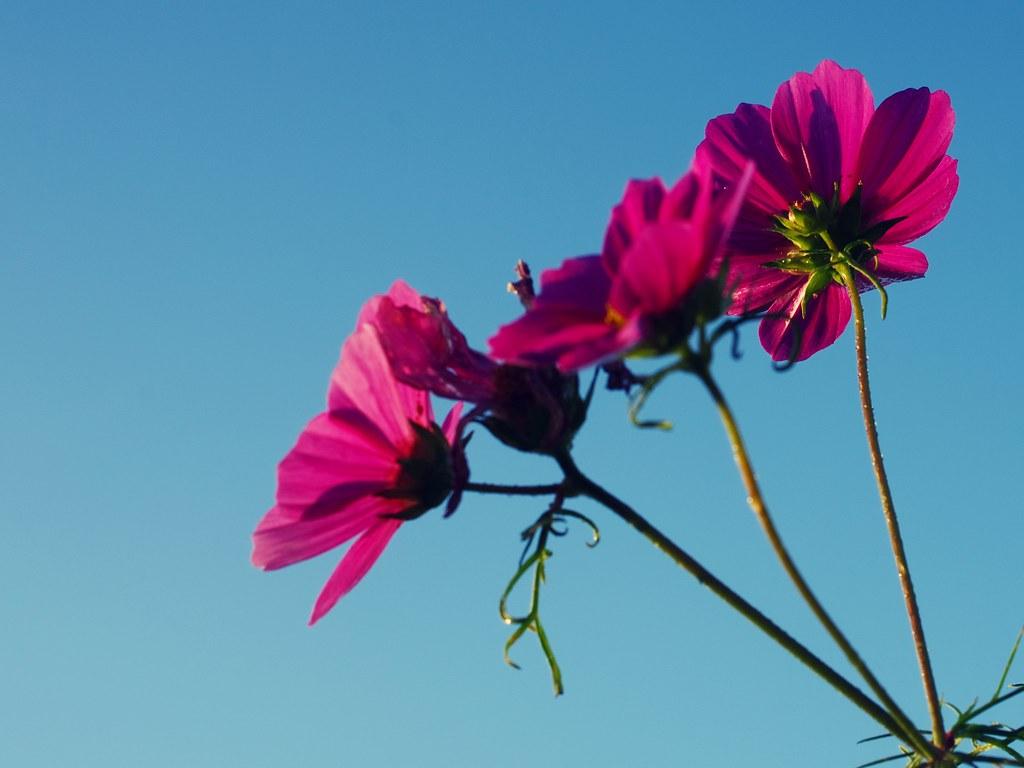 來看花吧!!!
