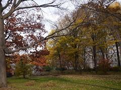 日, 2012-11-18 14:38 - Central Parkの紅葉