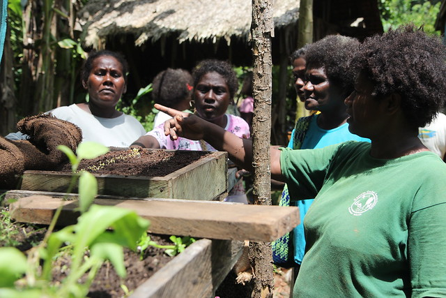 Women's workshop teaching nursery techniques in Western Province, Solomon Islands. Photo by Wade Fairley, 2012.