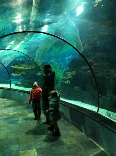 Ocean World Shanghai (Changfeng Park)