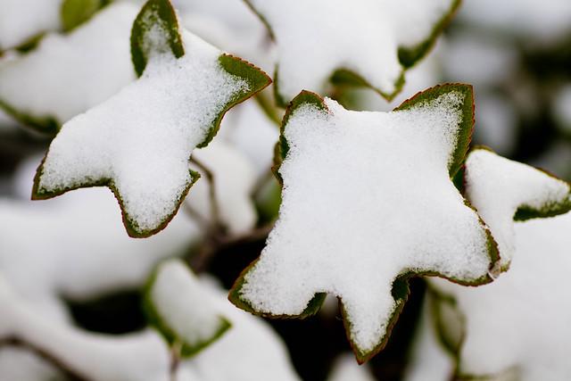 White Christmas 2012-014.jpg