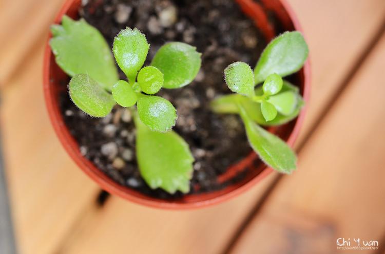 2012多肉植物22.jpg