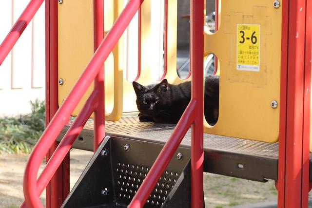 滑り台と猫 3