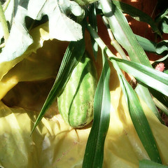 Dia 4- Primeira melancia