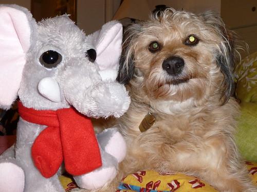 Winnie & her new Elephant