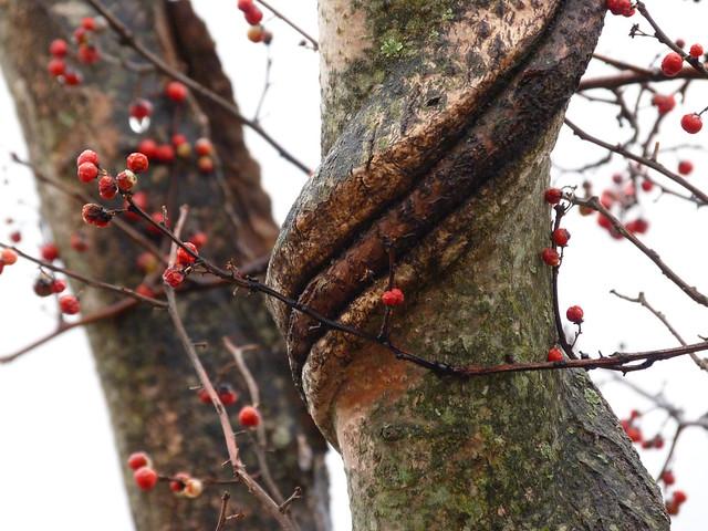 tree twist