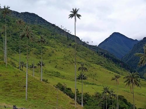 Fotografía del Valle de Cocora (Colombia)