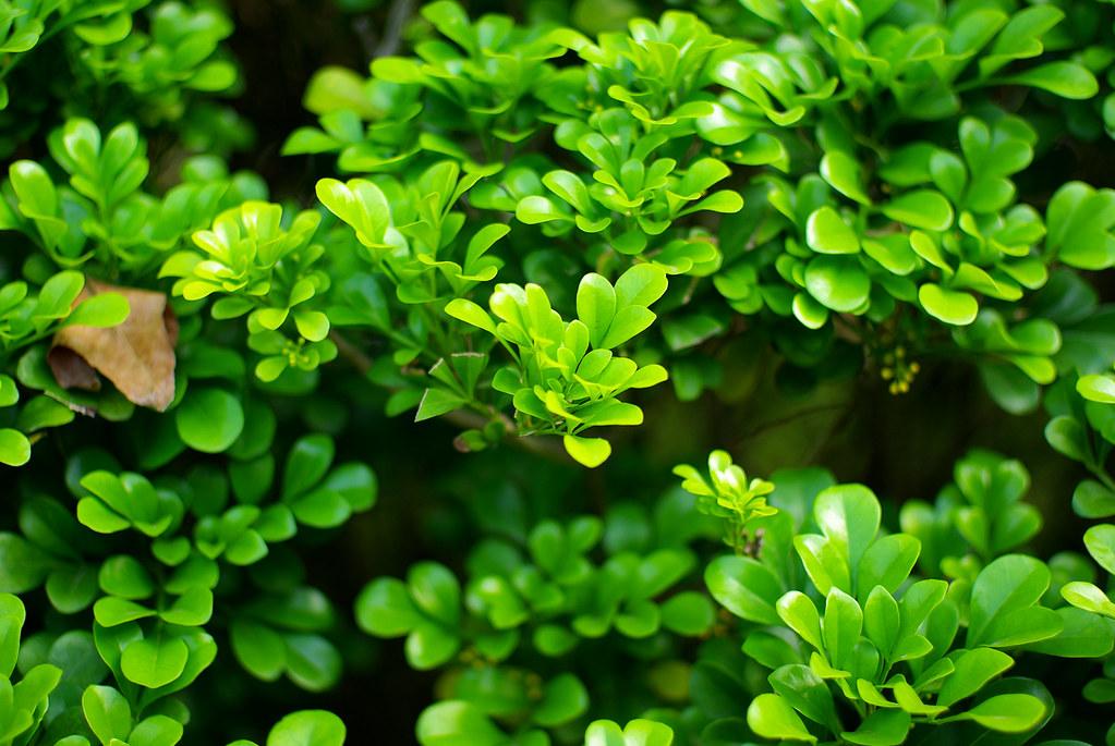 體驗pentax的綠