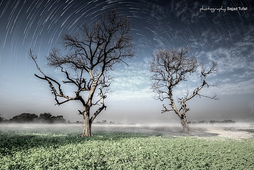 trees light sunset moon mist tree green grass misty fog by night digital canon dark stars photography darkness foggy scene fields sajjad tufail