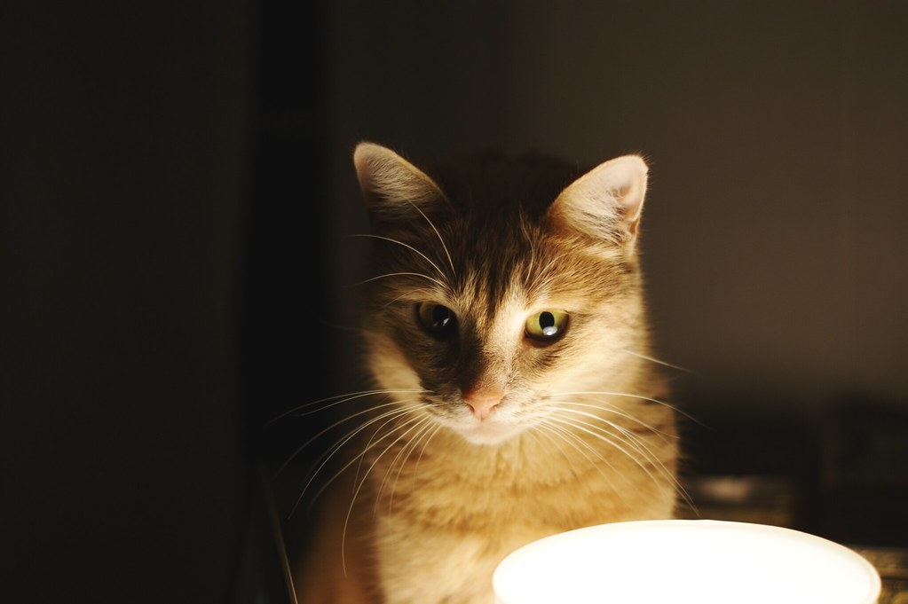 cat_emmaemilie