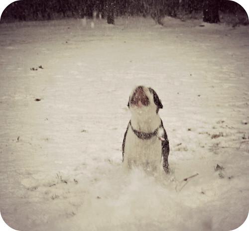 Charlies 2nd Snow Jan 2013 085edit