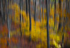 Fall Colors Blurred