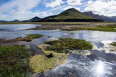 algae strewn river