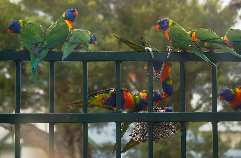 _parrots_8_