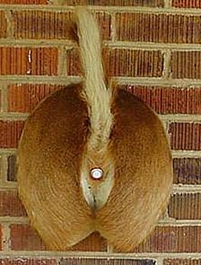 redneck_deer_butt_doorbell