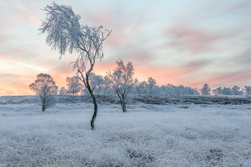 Winters Frost