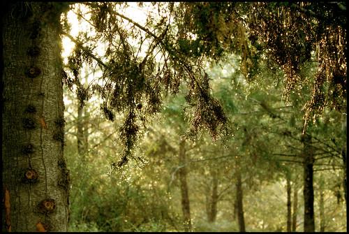 лес16