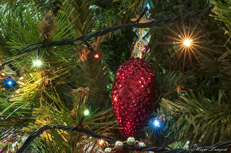 ornamente brad