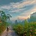 Morning Ride by Rosita So Image