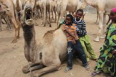 Camel Market (58)