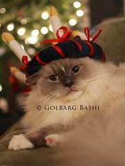Bashu as Saint Lucia aka Kitty of Light :) Merry Christmas!