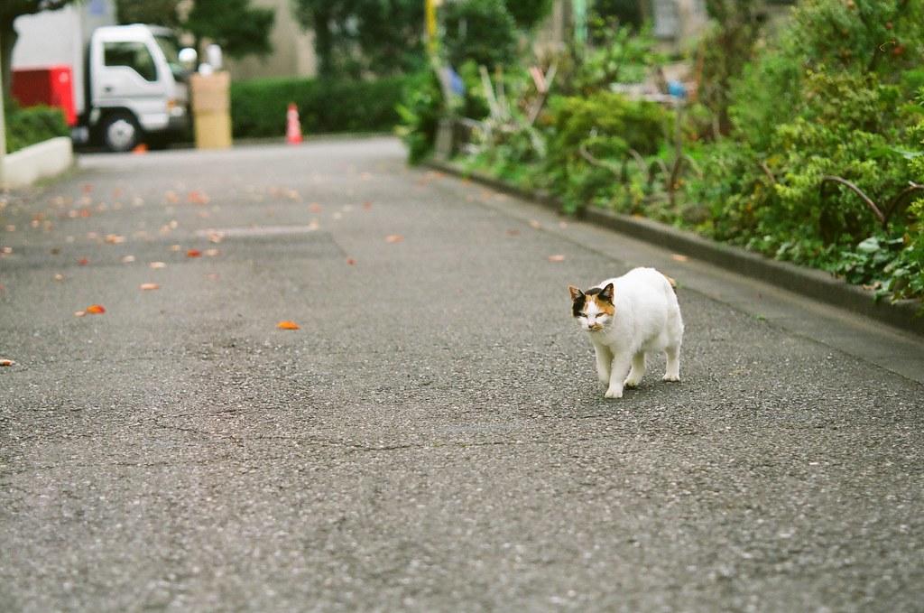 向かってくる猫