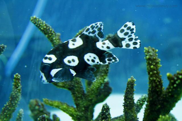 RWS S.E.A Aquarium 426