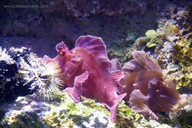 RWS S.E.A Aquarium 483