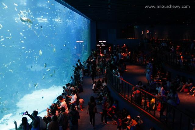 RWS S.E.A Aquarium 644