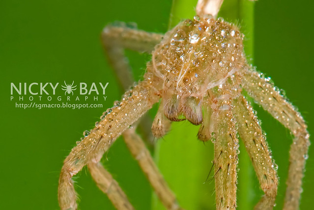 Spider Moult - DSC_1679
