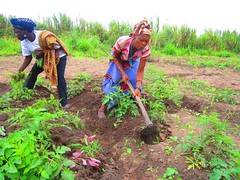 Women working in their vegetable gardens at the Capanda Agroindustrial Pole in Angola. Credit: Mario Osava/IPS