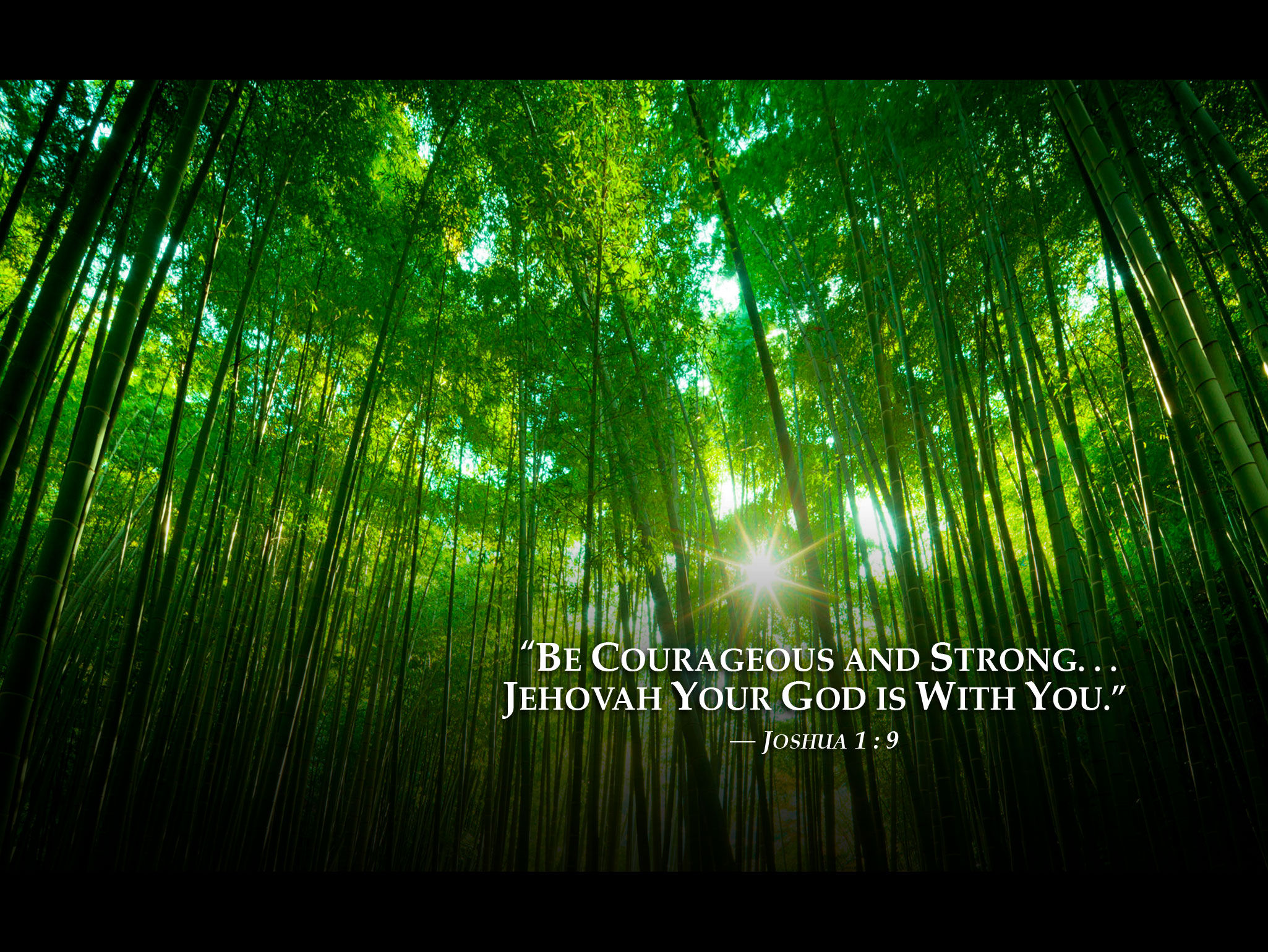 Iphone Android Desktop Backgrounds: Bambooforest 2013 Jehovah Witnesses Yeartext For Ipad