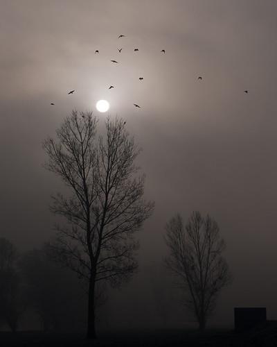 sun bird fog forest sunrise lumix fly olympus 45 panasonic spooky 18 m43 gf1