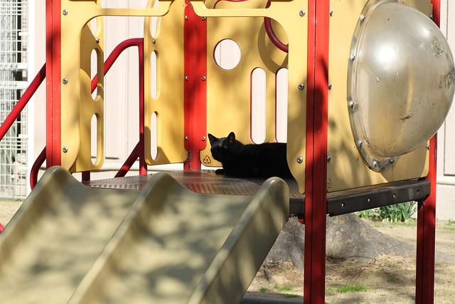 滑り台と猫 2