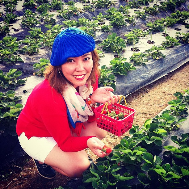 Strawberry picking at La Trinidad #Baguio #Travel #strawberries #familytrip #instatravel #philippines #itsmorefuninthephilippines