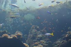 coral reef, coral, fish, coral reef fish, marine biology, underwater, shoal, reef,