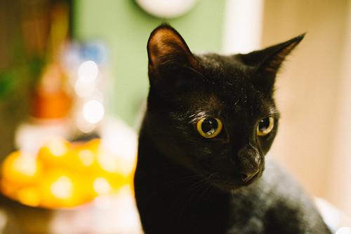 [フリー画像素材] 動物 (哺乳類), 猫・ネコ ID:201301051000