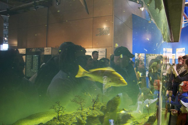 Aquarium During Feeding