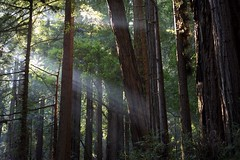 [Free Images] Nature, Forest, Crepuscular Rays ID:201301092000