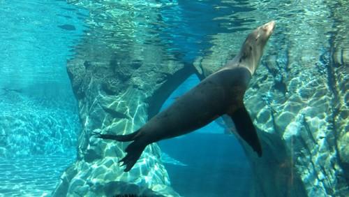 Fresno Zoo 11-24-12