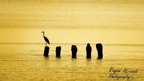 birds & sea cellulite
