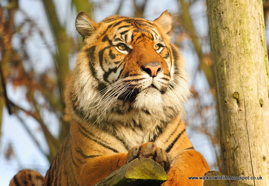 Chester Zoo 31.12.12 1312