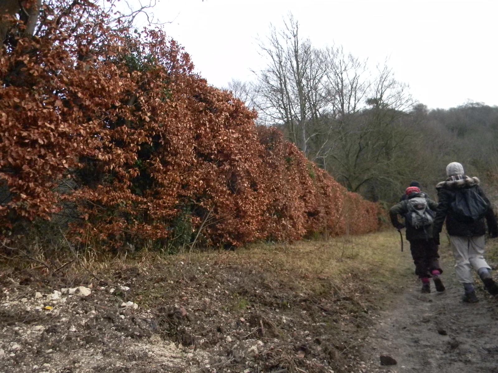 Russet Hedge Saunderton via Bledlow