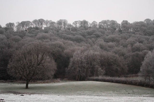 Midgeley Wood