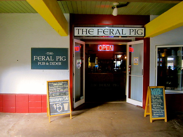 the feral pig in kauai