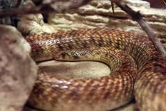 Snake -2-