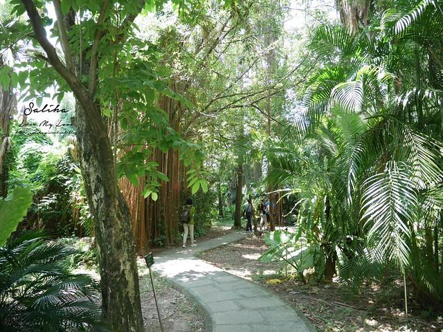 台北一日遊景點推薦植物園荷花蓮花池 (2)